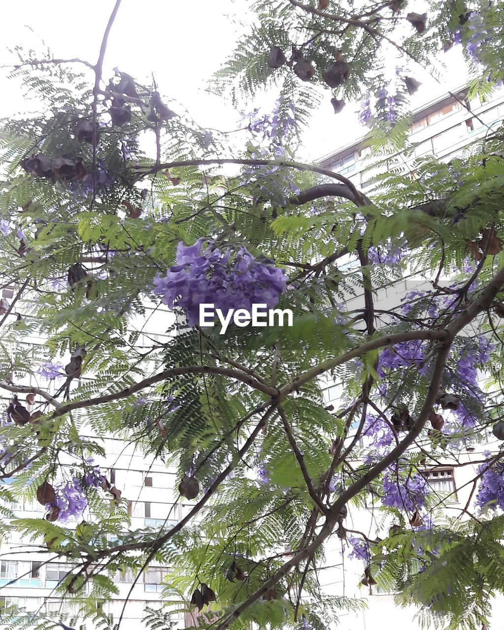 flower, growth, branch, tree, nature, low angle view, beauty in nature, fragility, blossom, purple, freshness, botany, no people, day, hanging, springtime, petal, outdoors, plant, close-up, flower head, sky