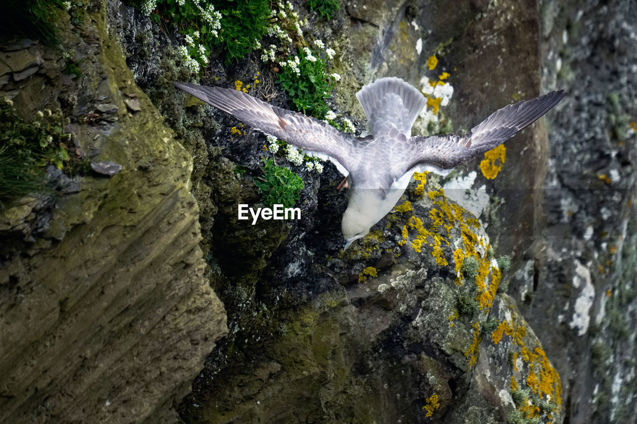 High angle view of seagull flying over rock formation