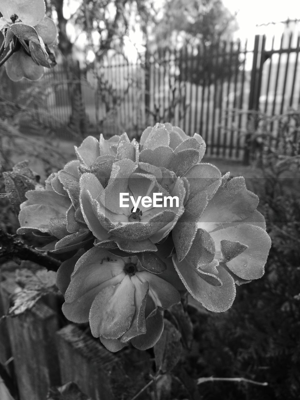 flower, plant, petal, nature, focus on foreground, growth, beauty in nature, outdoors, blooming, flower head, front or back yard, day, park - man made space, no people, fragility, close-up, freshness, tree