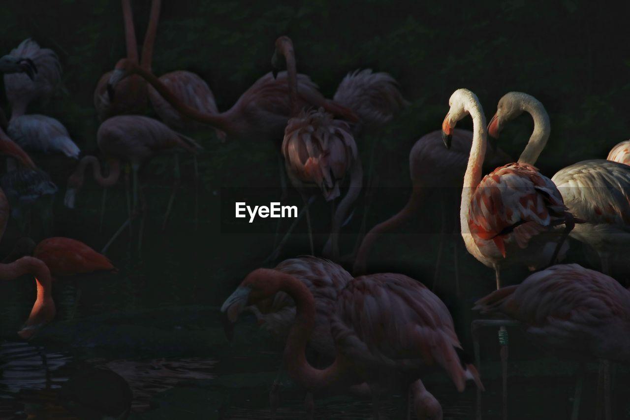 flamingo, bird, animals in the wild, group of animals, vertebrate, animal wildlife, animal themes, animal, no people, day, nature, beauty in nature, focus on foreground, beak, water, large group of animals, outdoors, lake, animal neck, zoology, flock of birds, freshwater bird