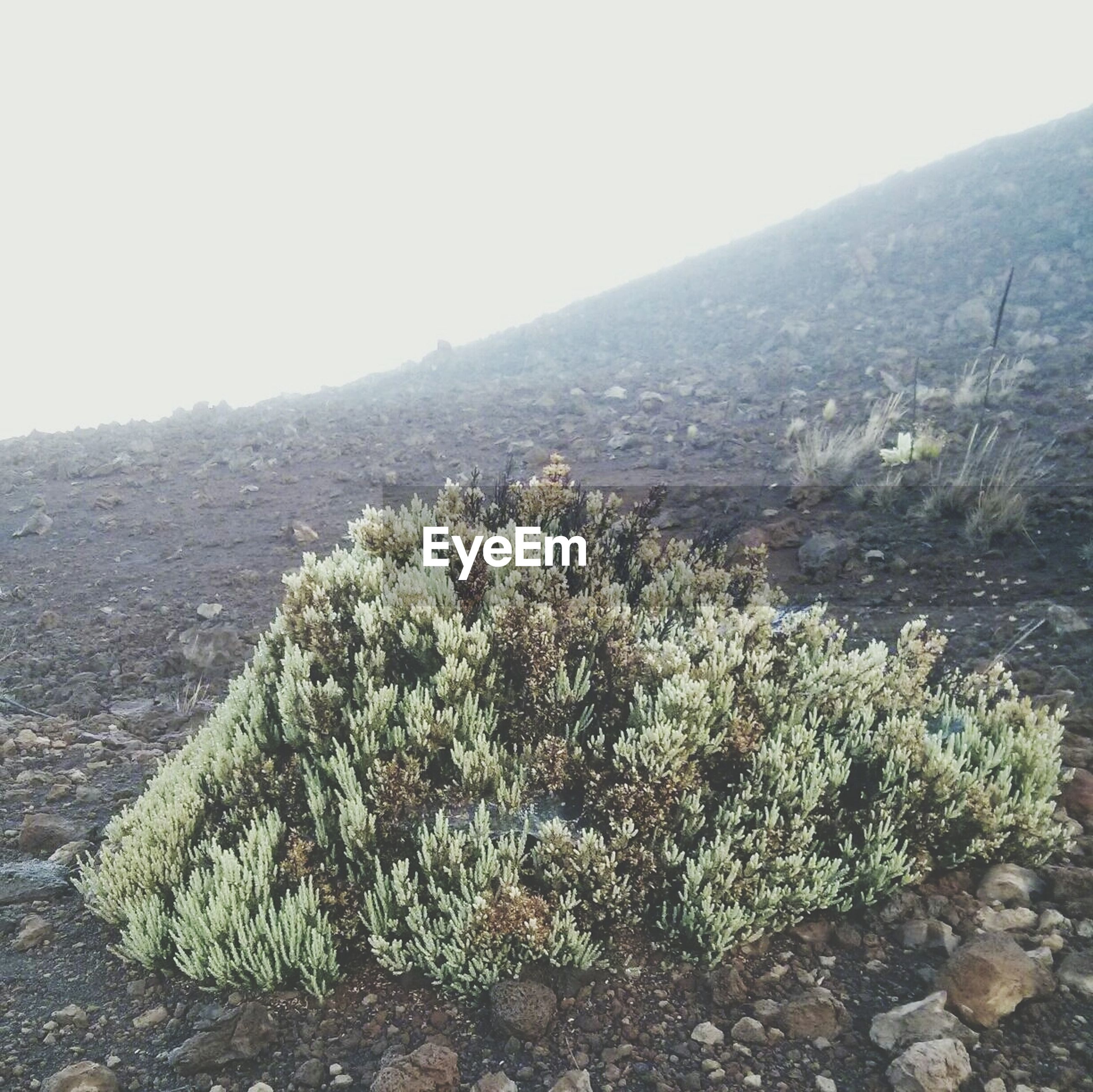 Close-up of plant by hill