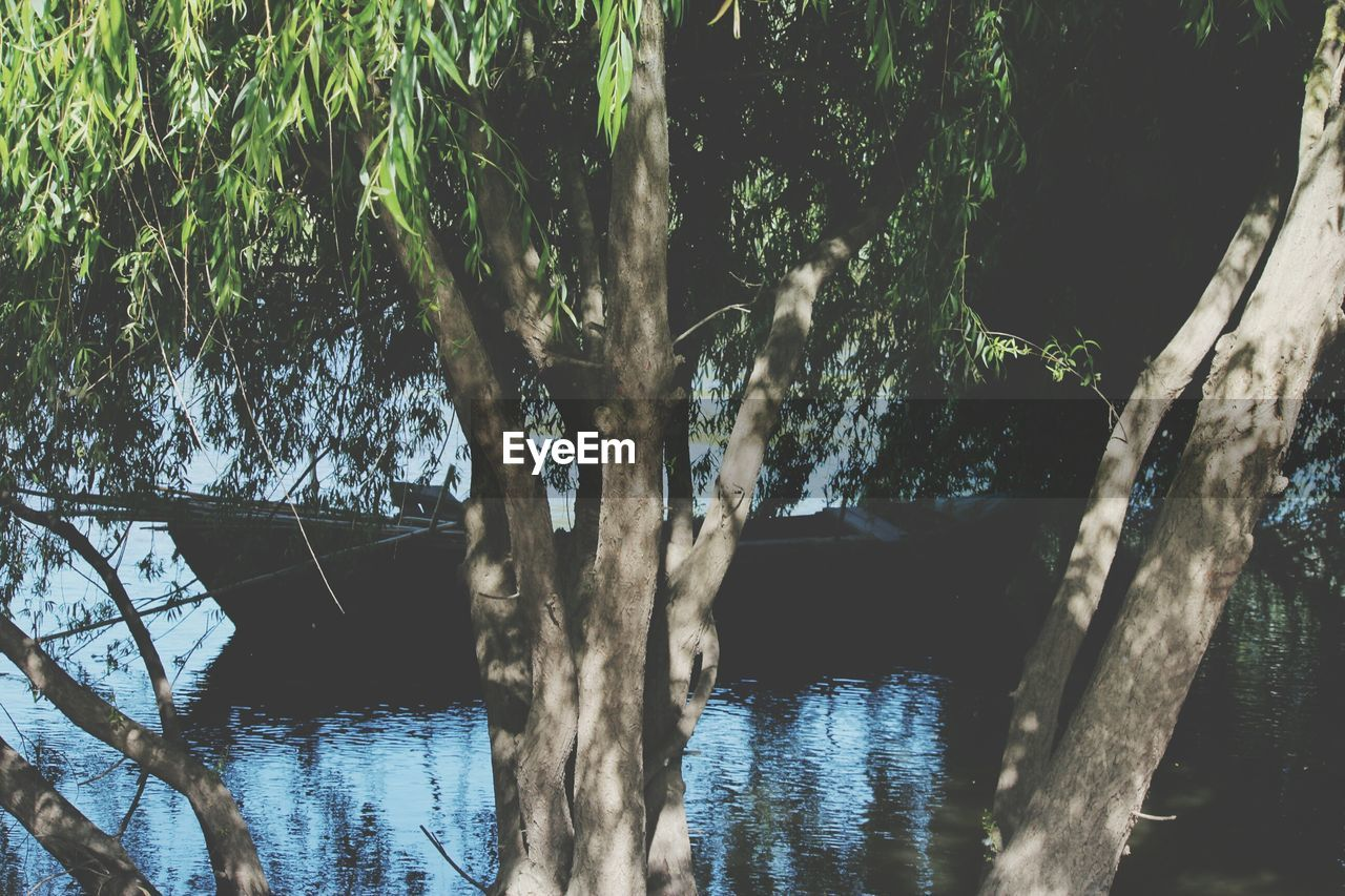 water, river, tree, nature, waterfront, tranquility, day, no people, beauty in nature, outdoors, growth, scenics, branch