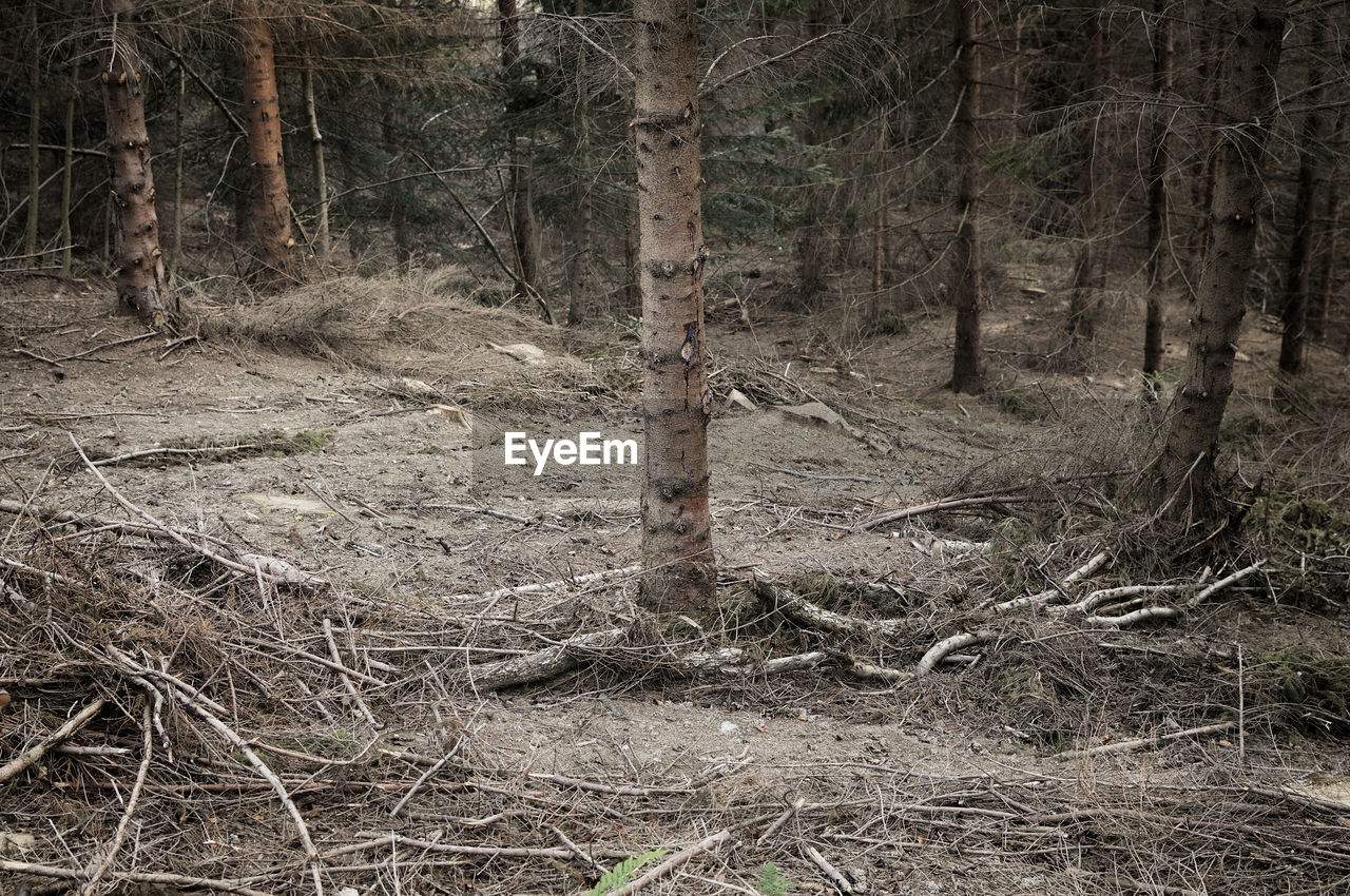 tree, forest, land, plant, tree trunk, trunk, woodland, no people, nature, tranquility, day, non-urban scene, environment, outdoors, remote, tranquil scene, growth, landscape, scenics - nature, wood - material