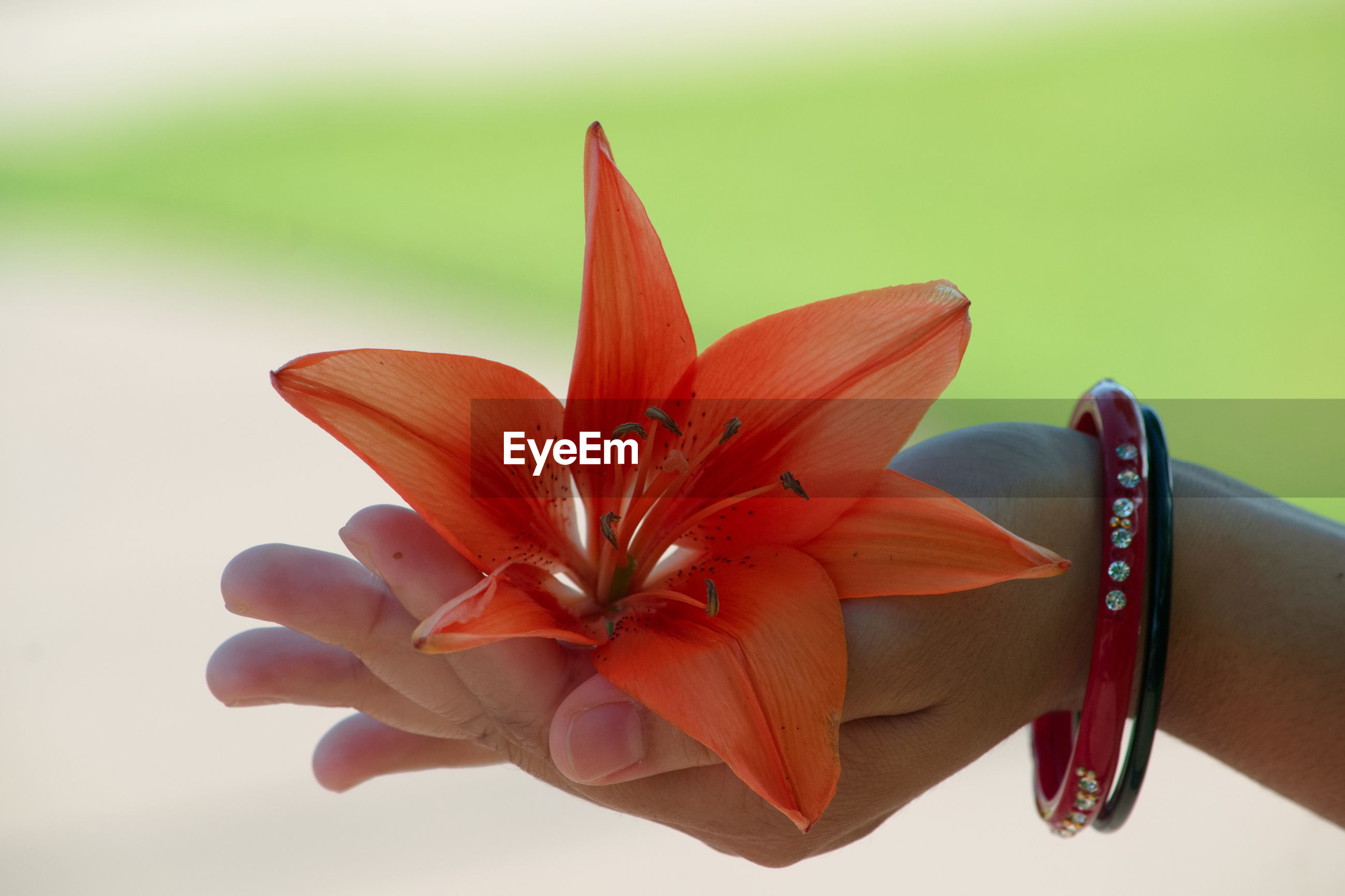 Close-up of woman hand holding orange flower outdoors