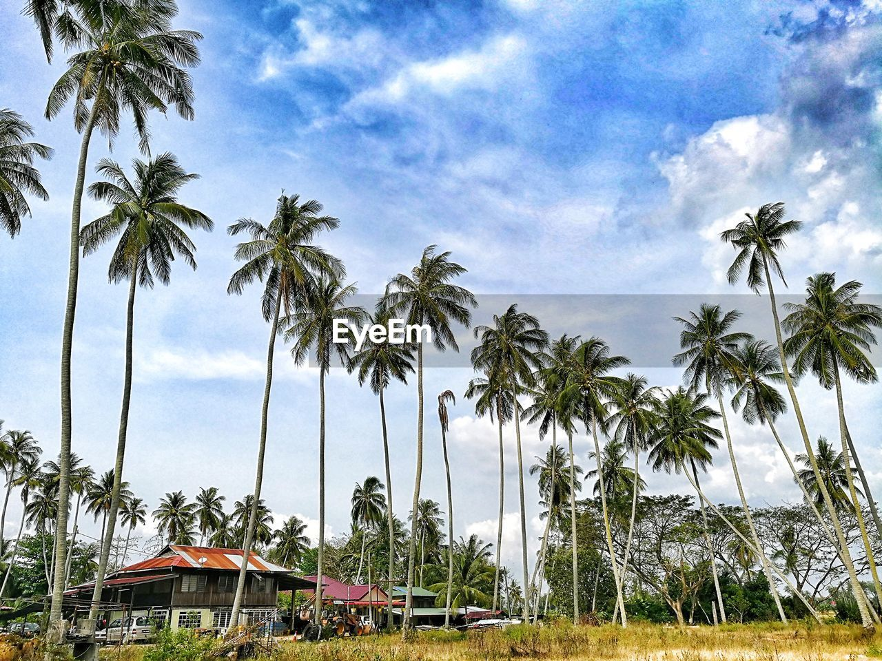 palm tree, tree, sky, nature, beauty in nature, no people, day, tranquility, scenics, cloud - sky, growth, outdoors, beach, sea, grass, water