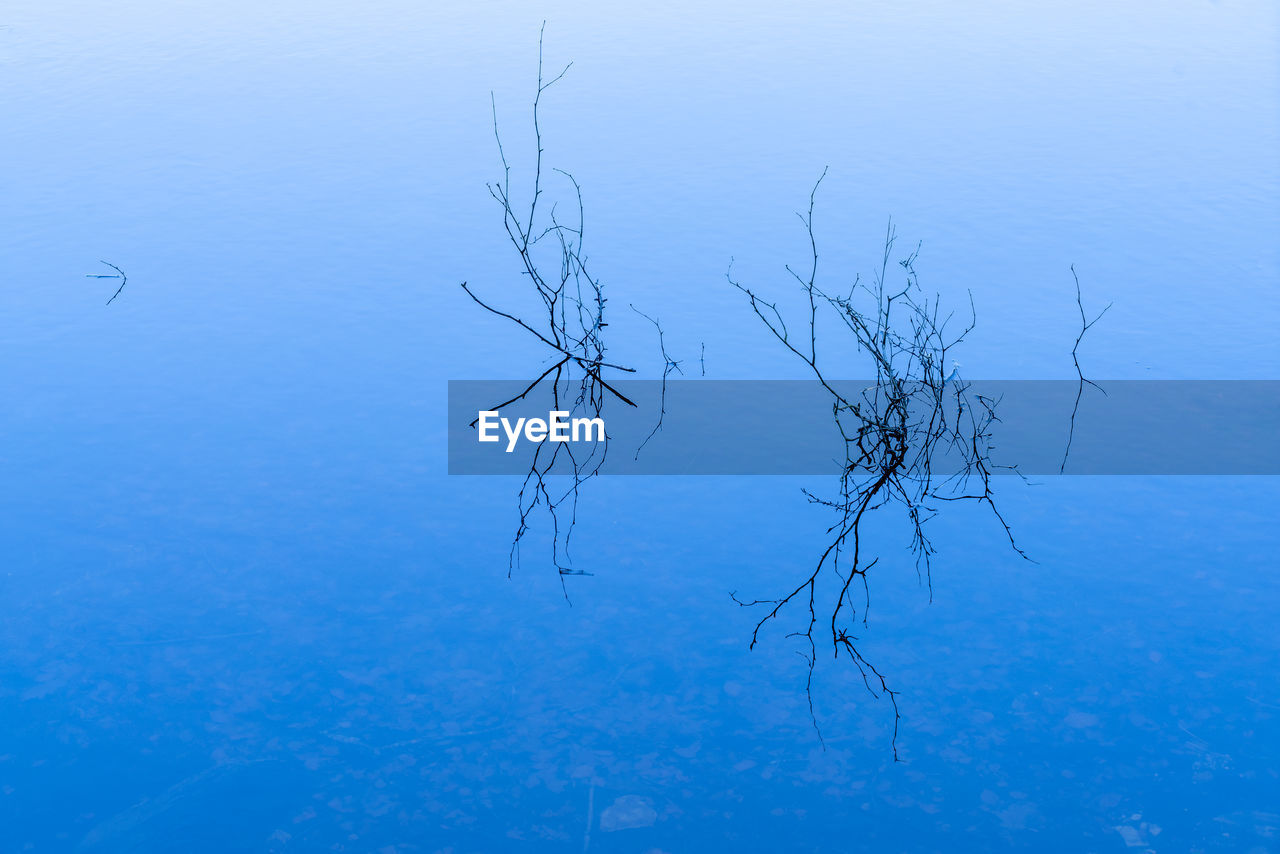 water, tranquility, reflection, no people, beauty in nature, plant, nature, blue, scenics - nature, lake, waterfront, tranquil scene, day, bare tree, high angle view, standing water, tree, outdoors, vertebrate, floating on water