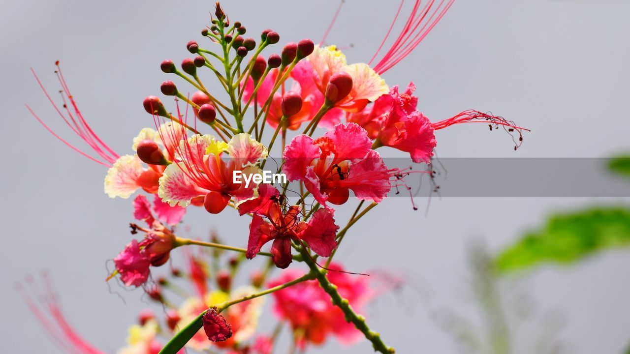 LOW ANGLE VIEW OF FLOWERS