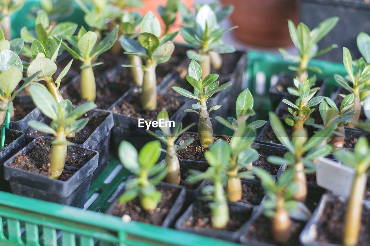 Saplings growing in tray at greenhouse