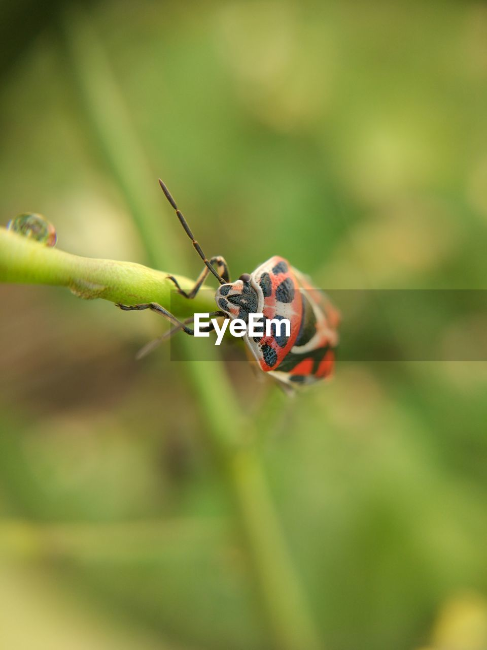 invertebrate, insect, animals in the wild, animal wildlife, animal themes, animal, close-up, one animal, selective focus, plant, no people, day, nature, green color, focus on foreground, beetle, beauty in nature, zoology, outdoors