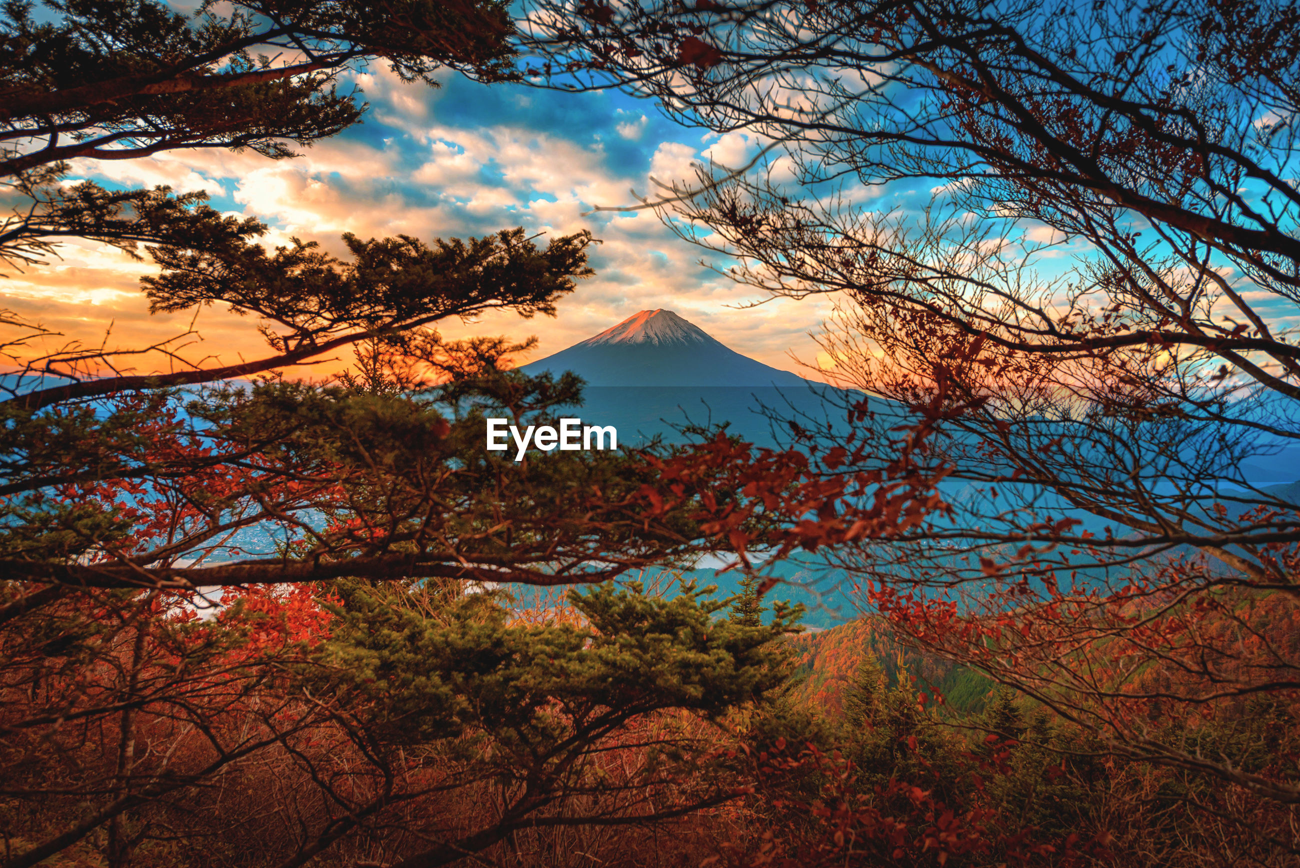 Scenic view of trees against mountain during sunset