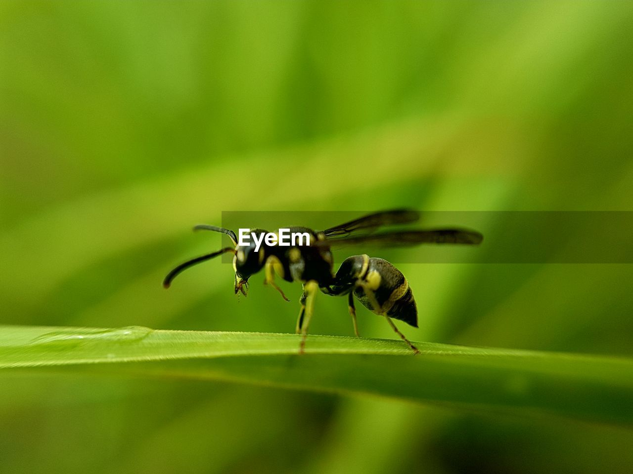 insect, invertebrate, animal themes, animals in the wild, animal, animal wildlife, plant part, leaf, green color, one animal, close-up, selective focus, plant, no people, nature, day, zoology, beauty in nature, growth, animal body part