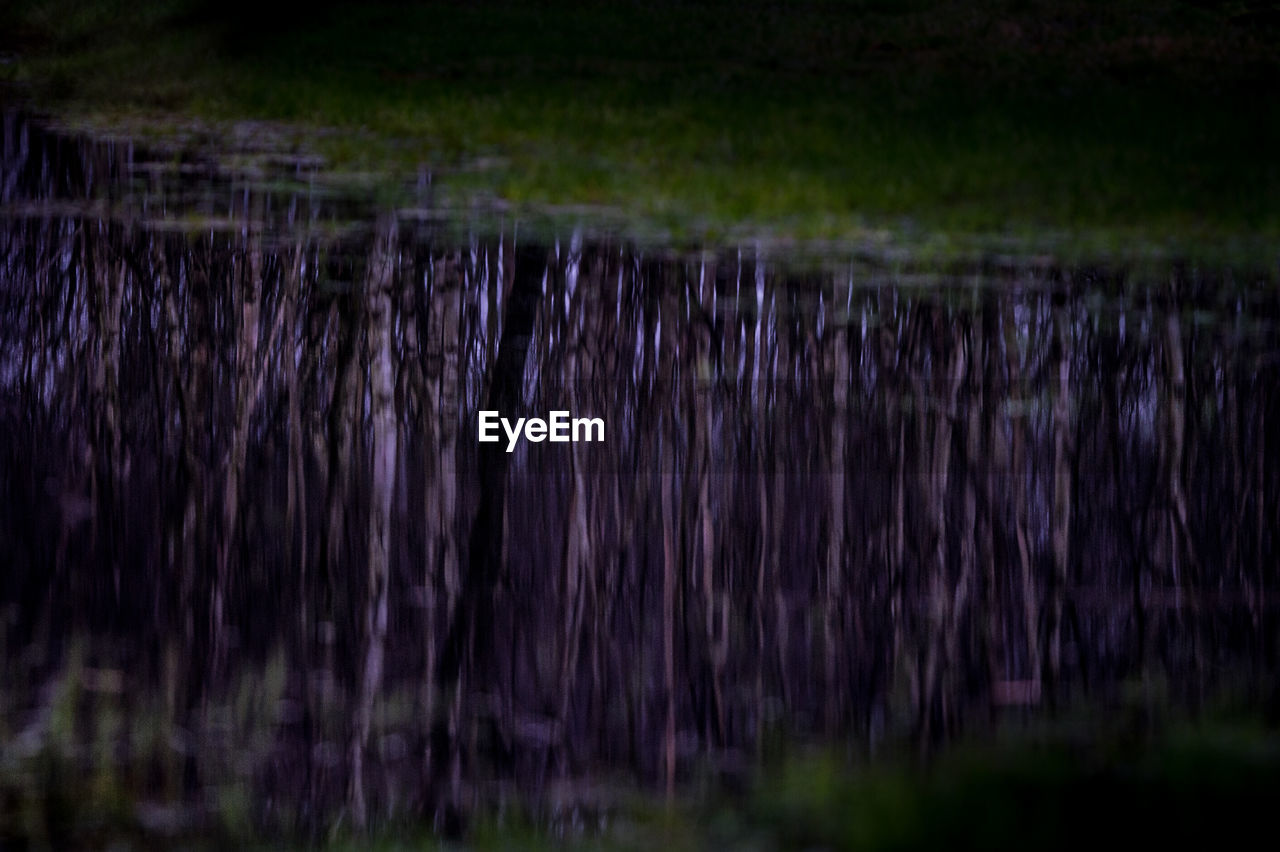 nature, purple, no people, outdoors, beauty in nature, growth, scenics, landscape, water, day, grass