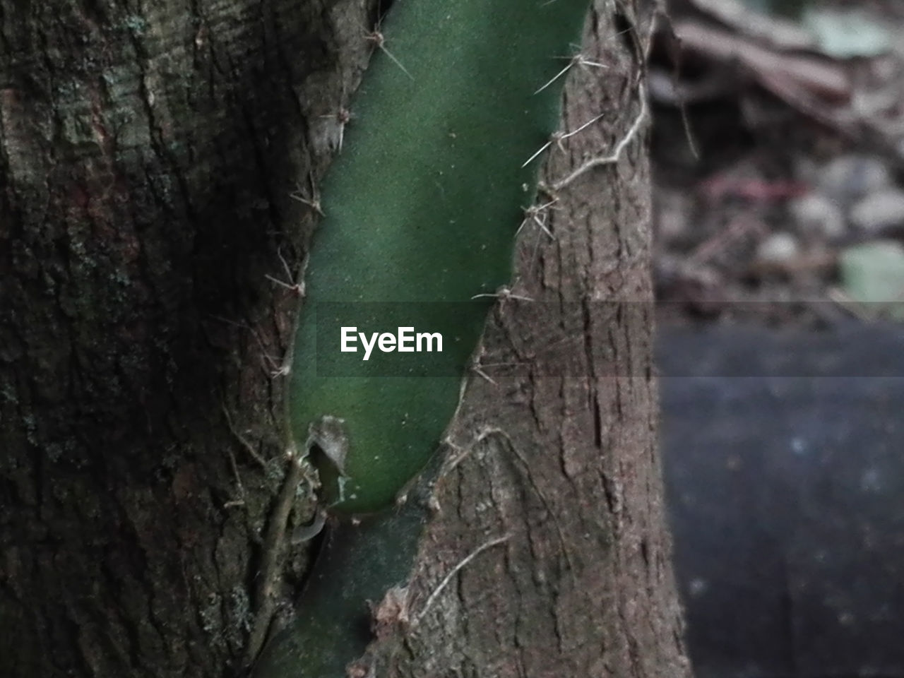 tree trunk, nature, close-up, focus on foreground, tree, growth, no people, day, green color, outdoors, textured, forest, beauty in nature, animal themes
