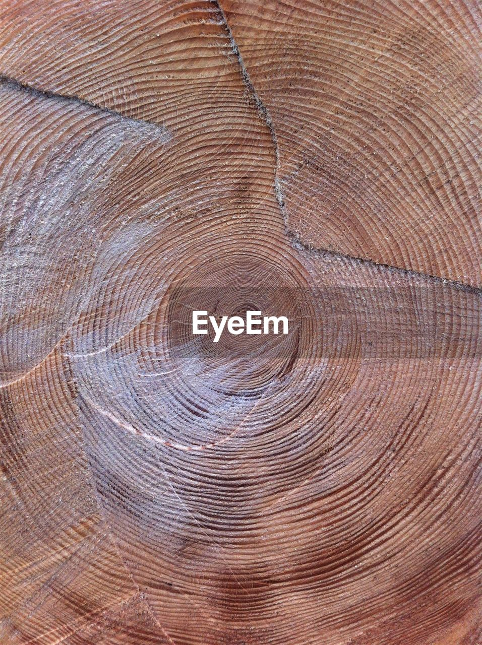 timber, backgrounds, pattern, nature, wood - material, textured, hardwood, cross section, lumber industry, material, brown, tree, full frame, tree trunk, wood grain, industry, close-up, no people, outdoors, concentric, tree ring, day