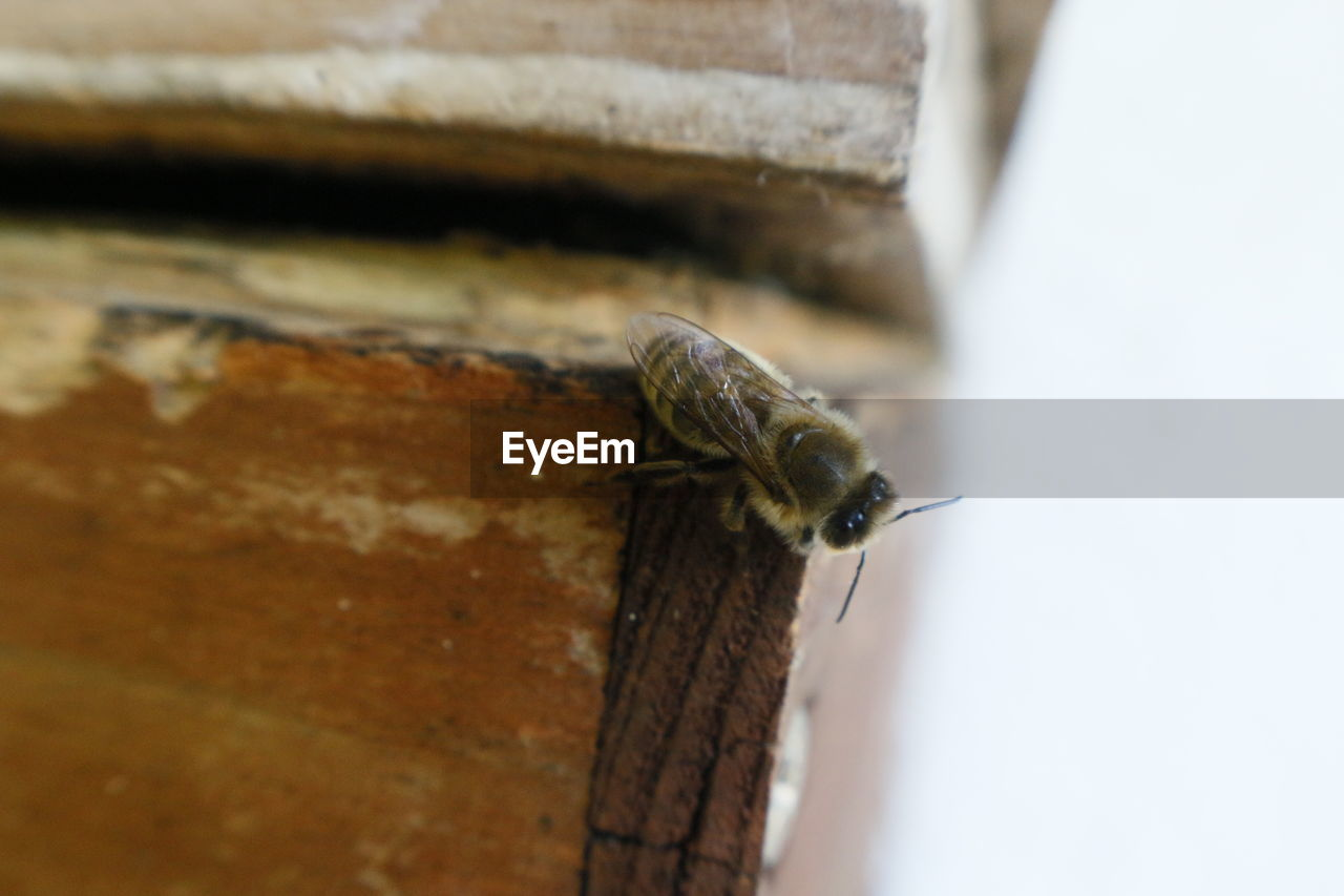 animal, animal wildlife, animals in the wild, animal themes, one animal, invertebrate, close-up, no people, selective focus, wood - material, gastropod, animal body part, insect, day, mollusk, outdoors, animal antenna, wall, wall - building feature, nature