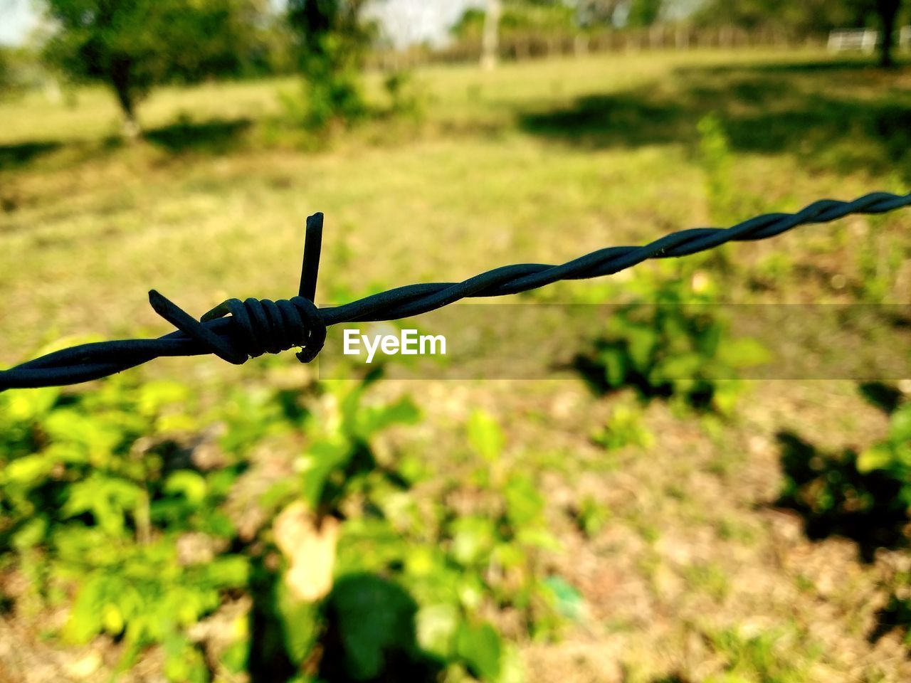 metal, protection, safety, security, barbed wire, focus on foreground, day, outdoors, close-up, no people, spiked, nature