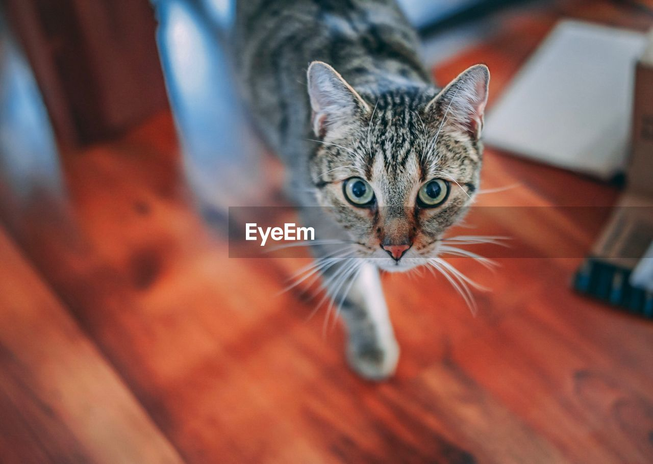 domestic cat, pets, domestic animals, feline, animal themes, mammal, looking at camera, whisker, portrait, indoors, one animal, no people, kitten, day, close-up