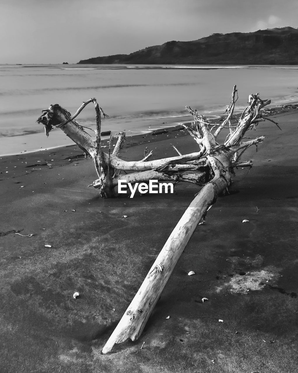water, driftwood, wood - material, nature, day, no people, wood, land, tranquility, sea, sky, beach, broken, tree, outdoors, dead plant, log, timber, scenics - nature