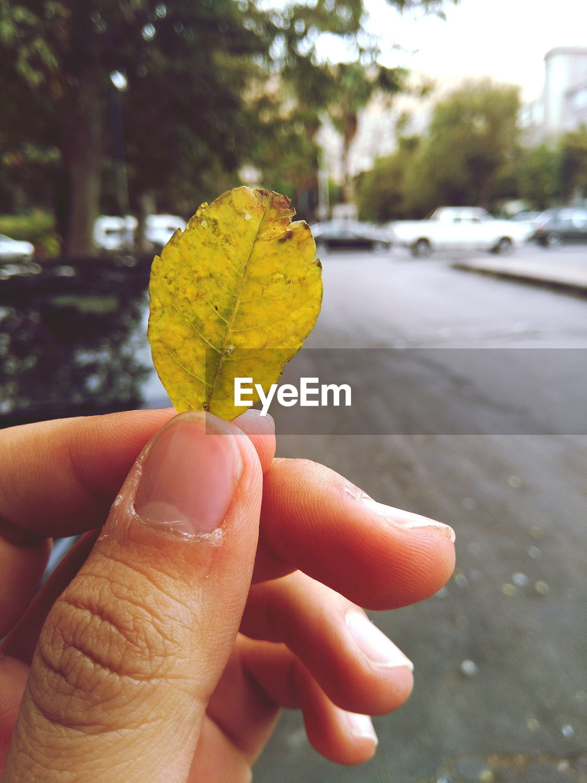 human hand, human body part, one person, focus on foreground, outdoors, personal perspective, holding, real people, fruit, day, close-up, autumn, road, nature, tree, food, people