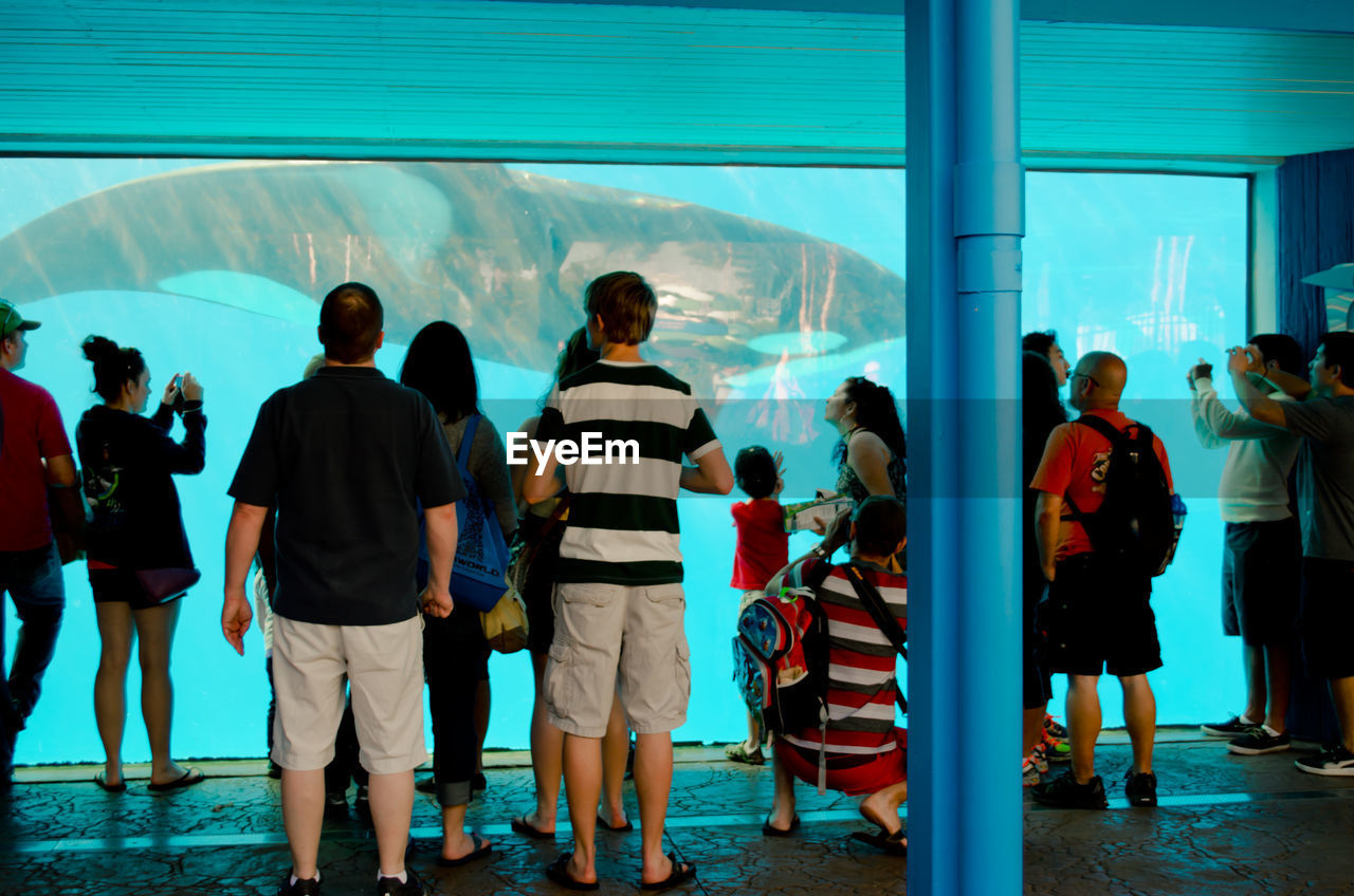 People looking at killer whale swimming in fish tank at aquarium
