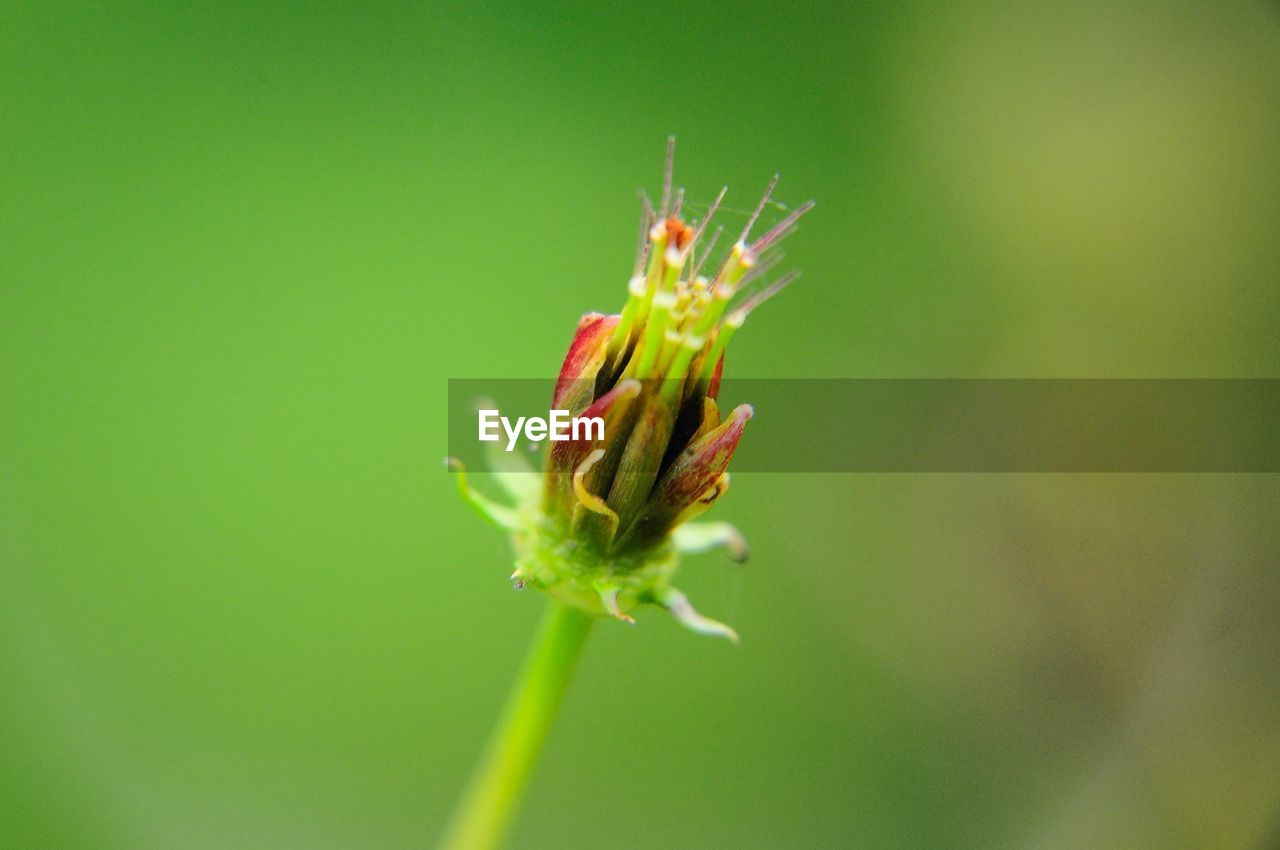 plant, growth, beauty in nature, close-up, flower, green color, no people, fragility, vulnerability, flowering plant, nature, day, freshness, beginnings, selective focus, focus on foreground, plant stem, bud, new life, botany, outdoors, sepal