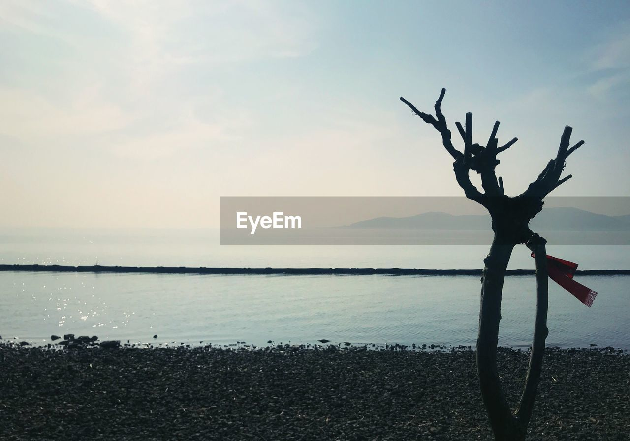 beauty in nature, scenics, water, nature, sky, tranquility, sea, tranquil scene, horizon over water, no people, silhouette, outdoors, tree, day, branch, close-up