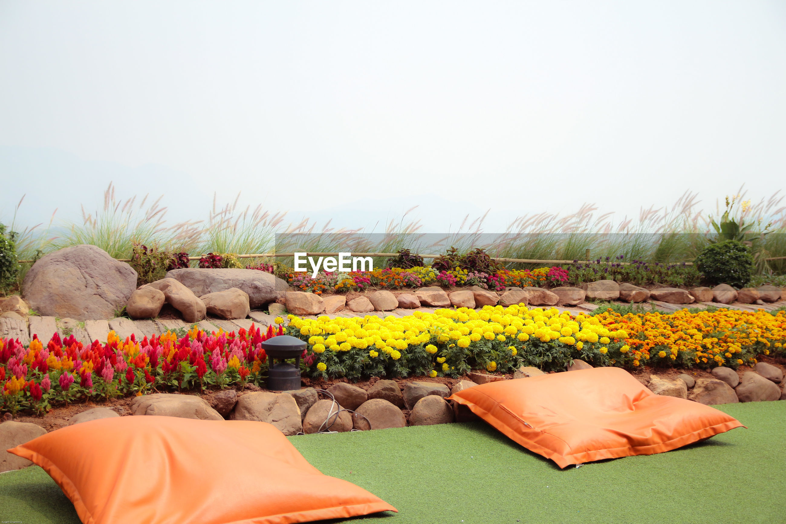 Pillow and flowering plants in garden against sky