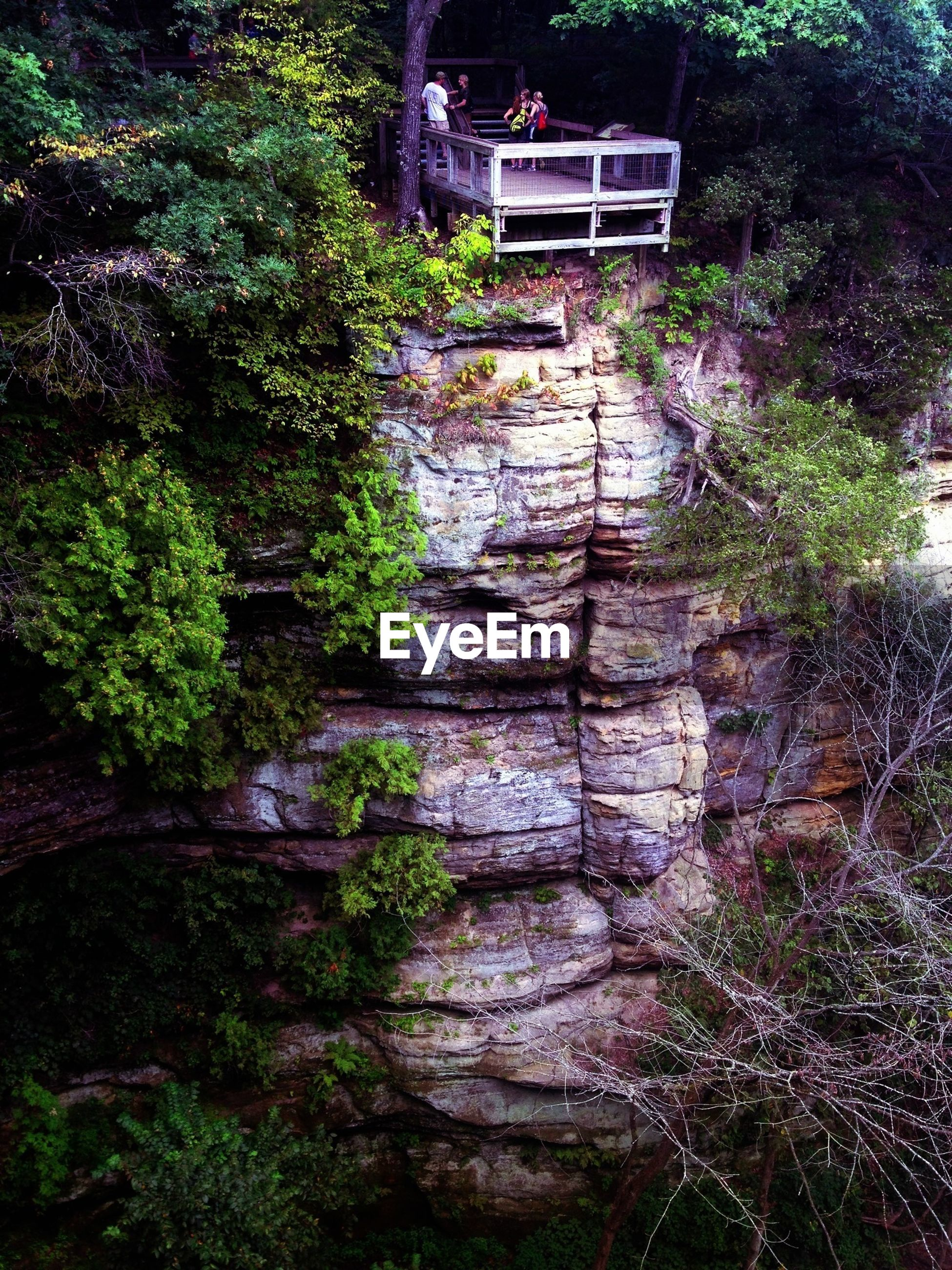 tree, plant, growth, built structure, steps, architecture, forest, green color, house, nature, building exterior, outdoors, no people, sunlight, day, tranquility, high angle view, bush, lush foliage, rock - object