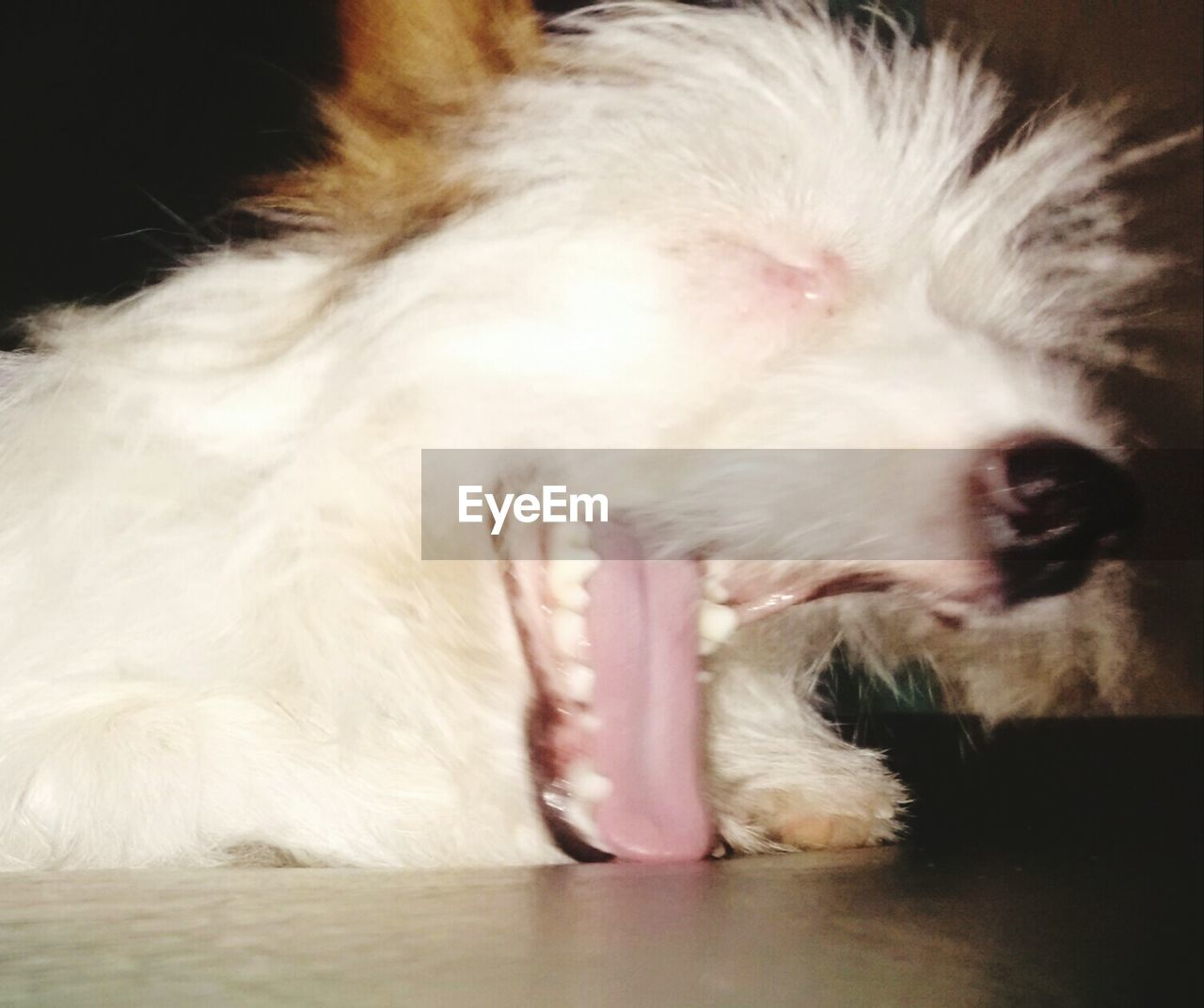 pets, one animal, domestic animals, dog, animal themes, mammal, close-up, no people, indoors, day