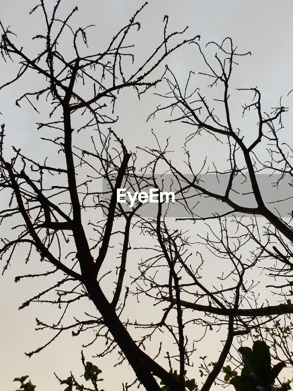 tree, branch, silhouette, plant, sky, bare tree, low angle view, nature, beauty in nature, tranquility, outdoors, no people, clear sky, day, growth, scenics - nature, tranquil scene, sunset, non-urban scene, dusk