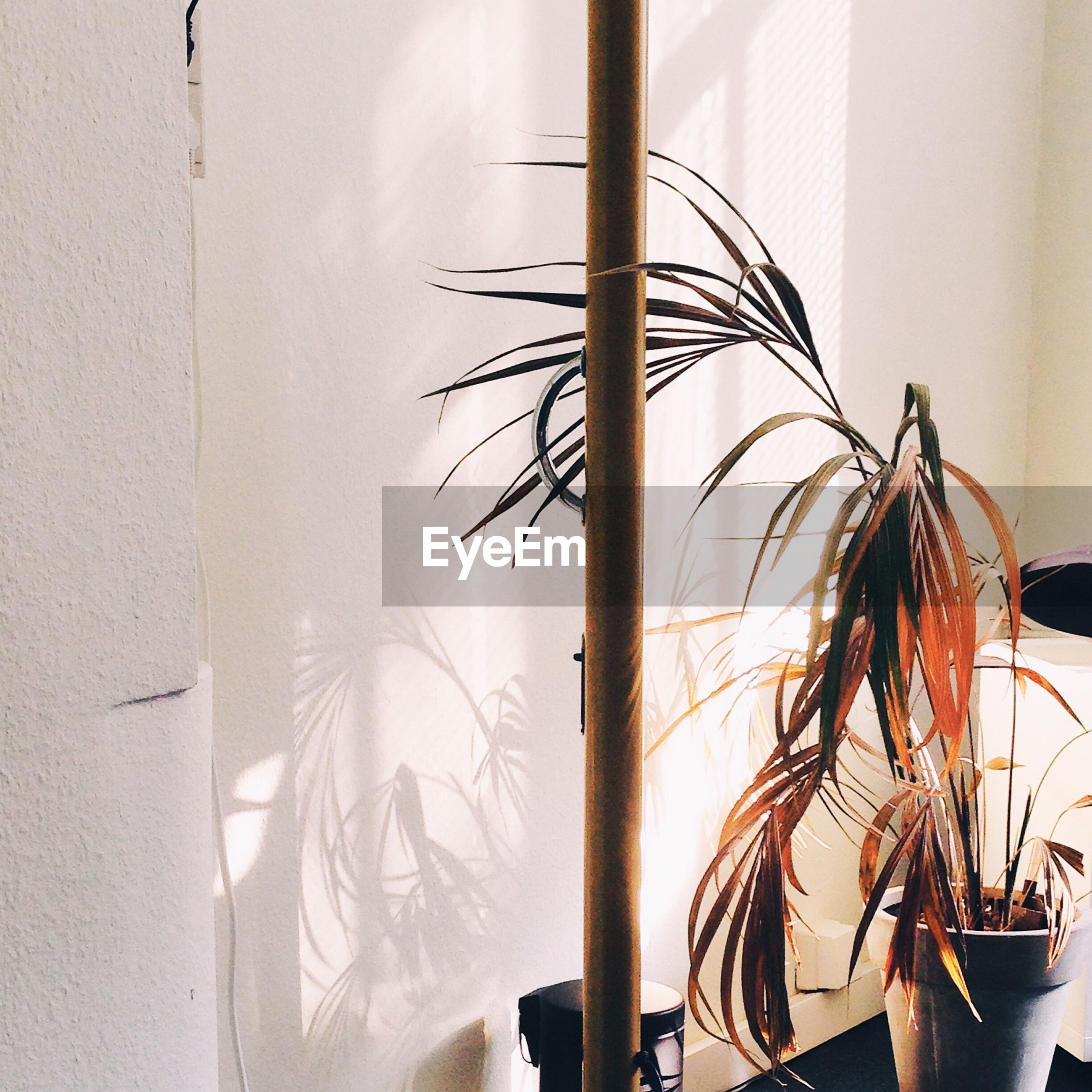 Potted plant by pole against white wall