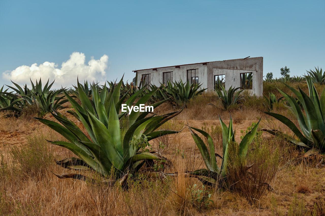 PLANTS GROWING IN FIELD AGAINST SKY