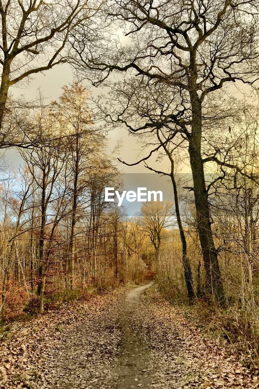 tree, plant, tranquility, direction, the way forward, tranquil scene, no people, nature, beauty in nature, land, scenics - nature, forest, non-urban scene, day, dirt, sky, bare tree, autumn, branch, road, outdoors, diminishing perspective, change, woodland