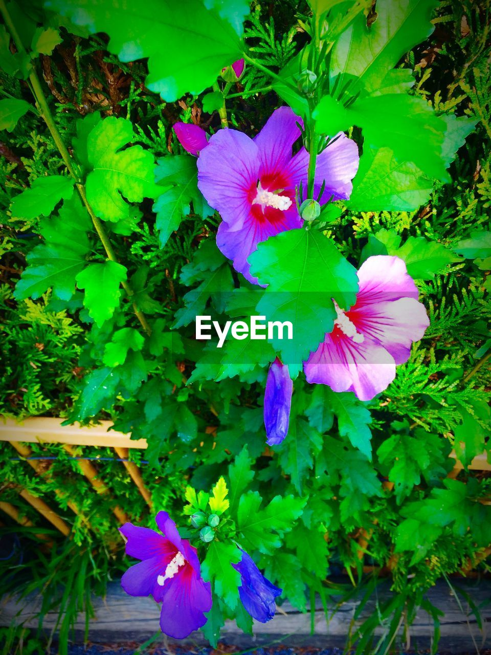 flower, growth, petal, fragility, nature, beauty in nature, plant, flower head, outdoors, green color, leaf, freshness, day, purple, no people, blooming, close-up, petunia