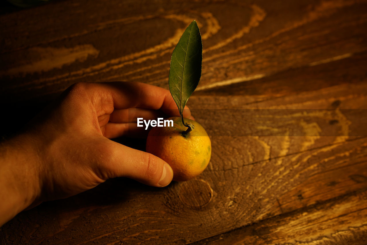 human hand, human body part, hand, food and drink, healthy eating, food, one person, fruit, real people, holding, freshness, plant part, leaf, wellbeing, indoors, wood - material, lifestyles, body part, close-up, finger, human limb