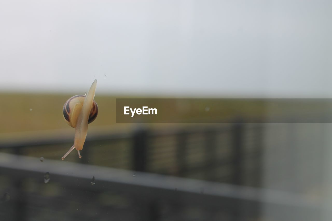 Close-Up Of Snail On Glass