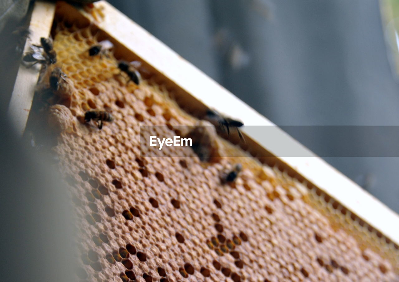 Close-Up Of Honeycomb With Bees
