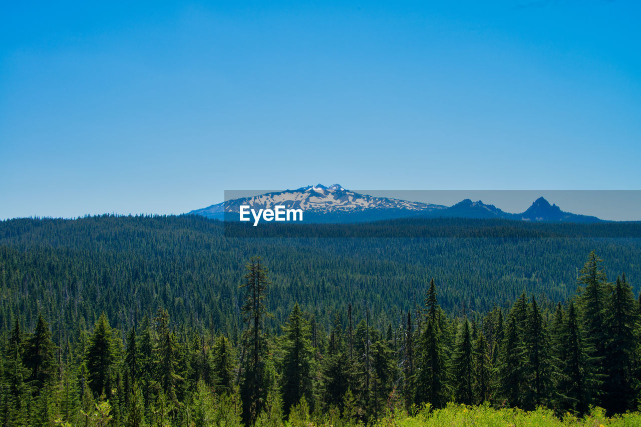 scenics - nature, sky, beauty in nature, tranquil scene, tranquility, mountain, plant, tree, non-urban scene, environment, no people, nature, blue, landscape, copy space, idyllic, growth, day, land, green color, outdoors, pine tree, mountain peak, coniferous tree