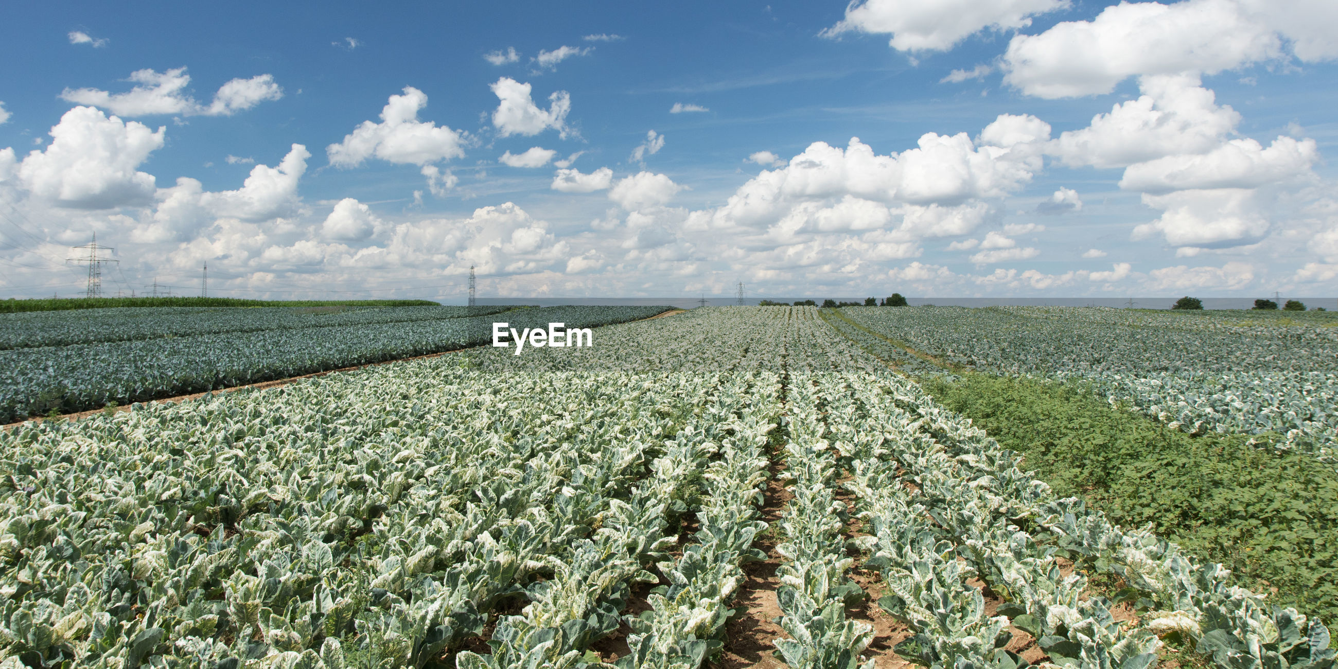 PANORAMIC VIEW OF AGRICULTURAL FIELD AGAINST SKY