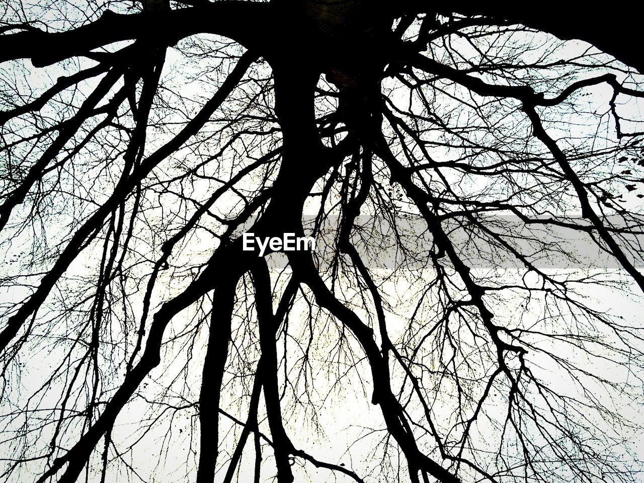 branch, tree, bare tree, low angle view, nature, tranquility, no people, tree trunk, silhouette, day, beauty in nature, outdoors, sky
