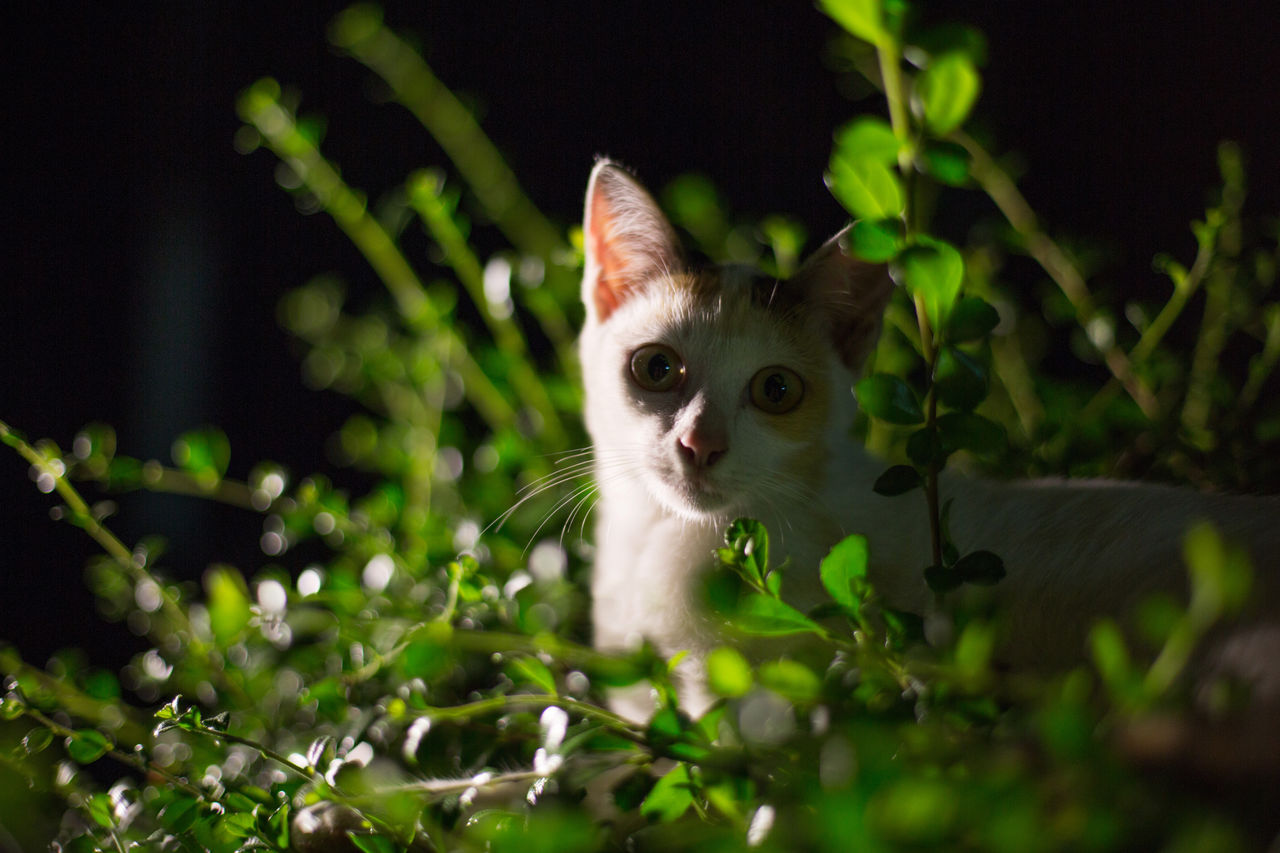 Close-up Of Cat Sitting In Plant At Night