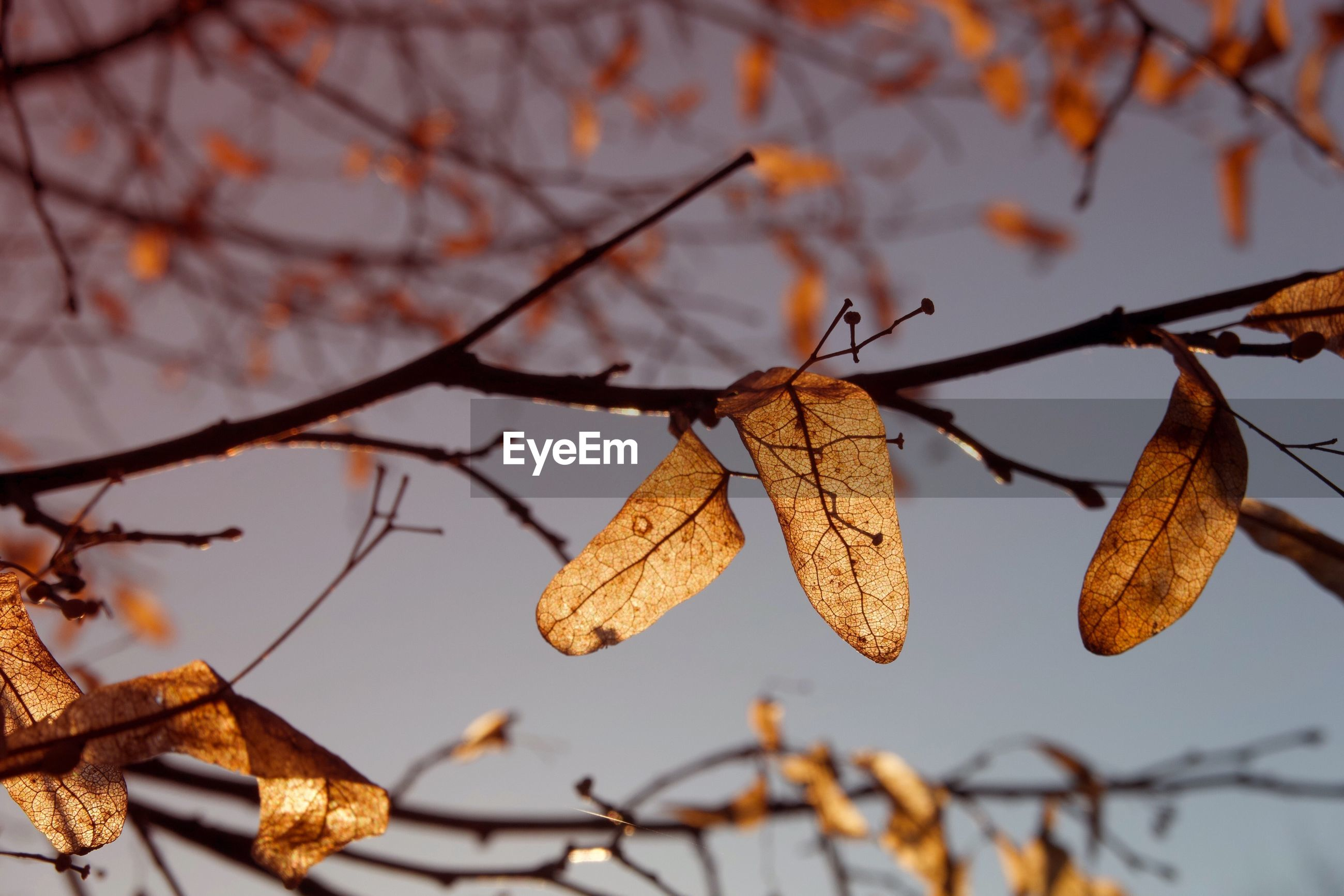 LOW ANGLE VIEW OF DRIED LEAVES ON TREE