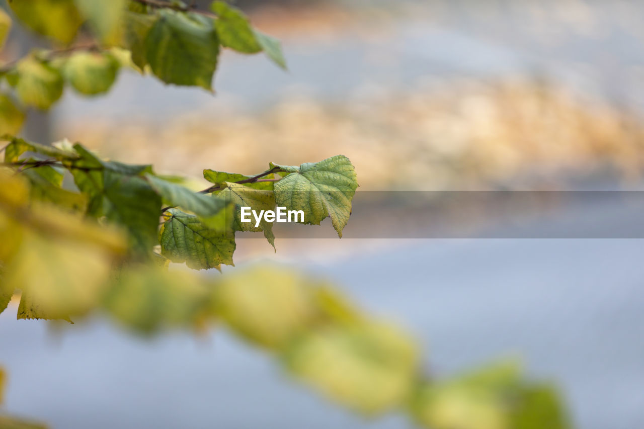 leaf, plant part, plant, growth, close-up, green color, beauty in nature, selective focus, day, no people, nature, focus on foreground, vulnerability, fragility, outdoors, freshness, tranquility, beginnings, tree, new life, leaves