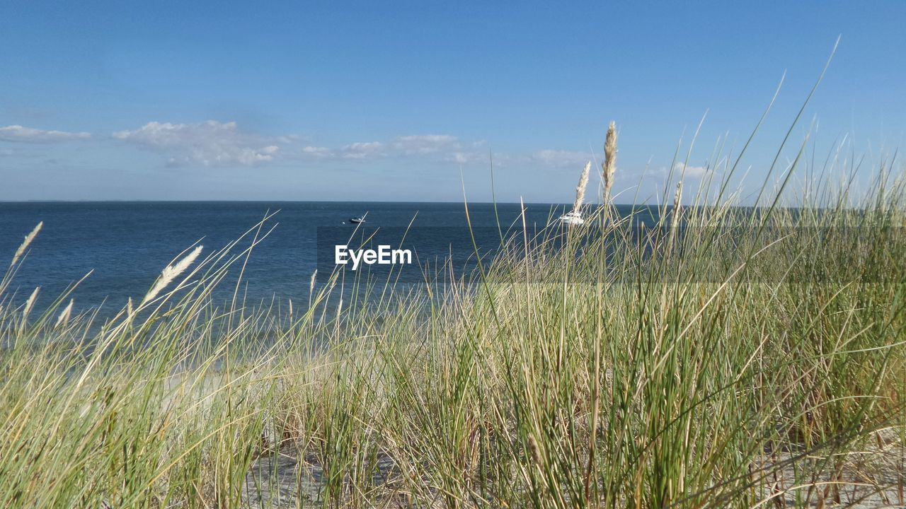 sky, sea, water, tranquility, beauty in nature, plant, growth, nature, horizon over water, tranquil scene, beach, grass, horizon, land, scenics - nature, day, no people, cloud - sky, non-urban scene, marram grass, outdoors, timothy grass