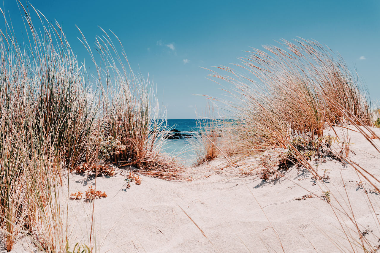 sky, water, sea, beauty in nature, nature, scenics - nature, plant, tranquility, beach, no people, day, tranquil scene, land, horizon over water, non-urban scene, grass, sand, horizon, cold temperature, marram grass, outdoors