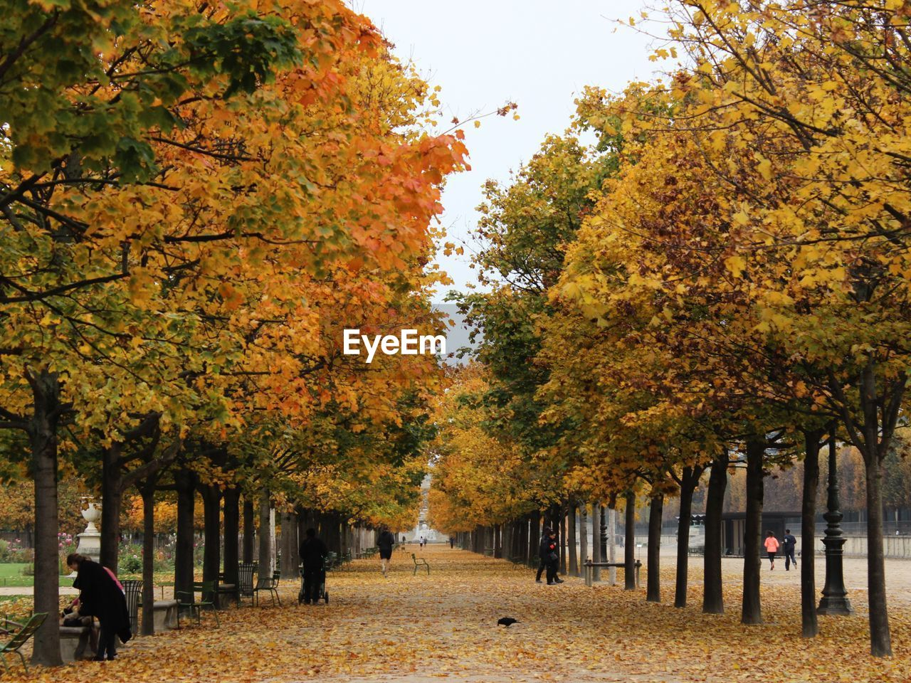 autumn, tree, change, plant, nature, day, real people, orange color, beauty in nature, group of people, outdoors, direction, the way forward, growth, footpath, men, park, incidental people, treelined, autumn collection