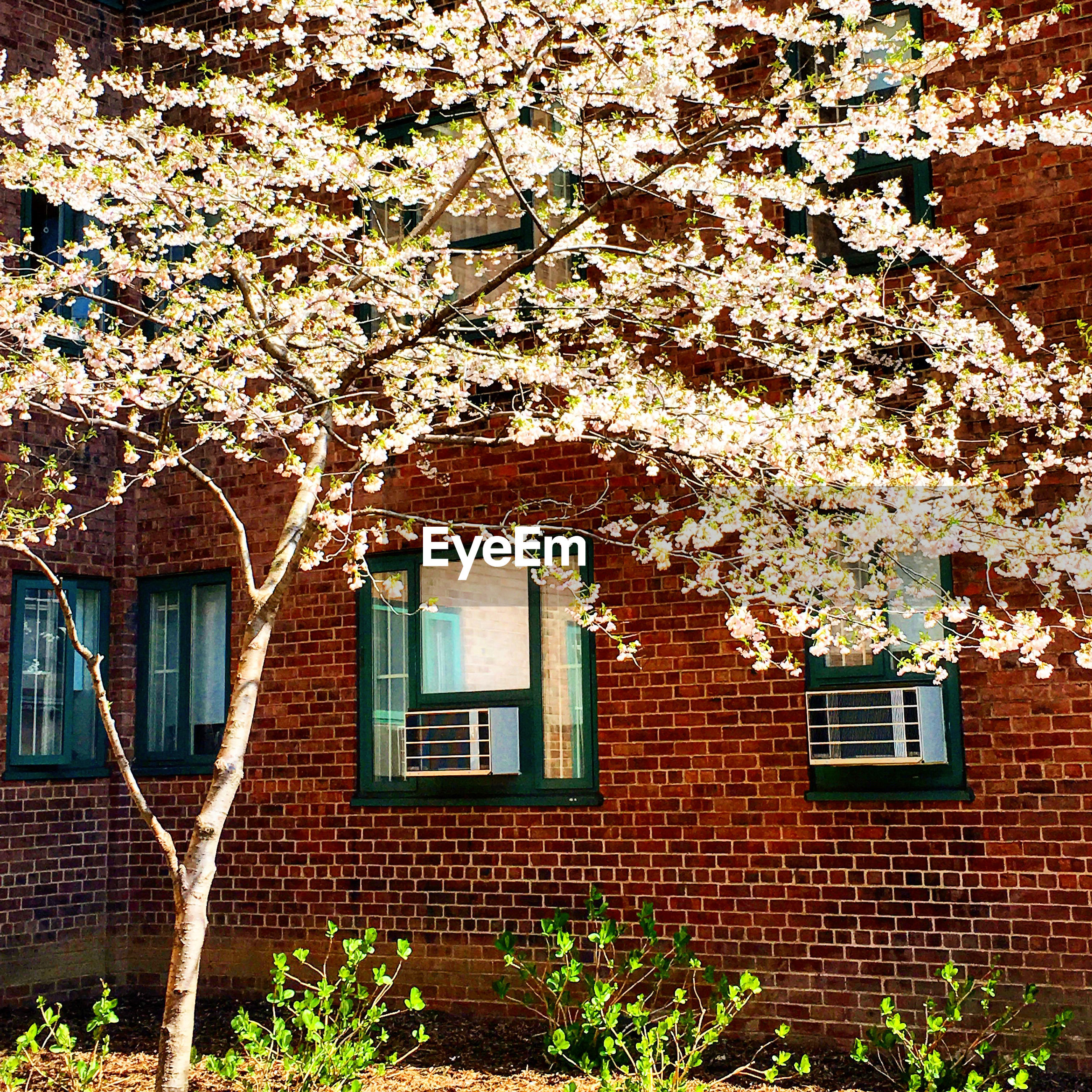 View of tree against brick building