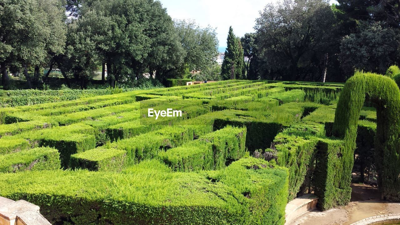 tree, green color, growth, topiary, no people, nature, day, maze, outdoors, beauty in nature, grass