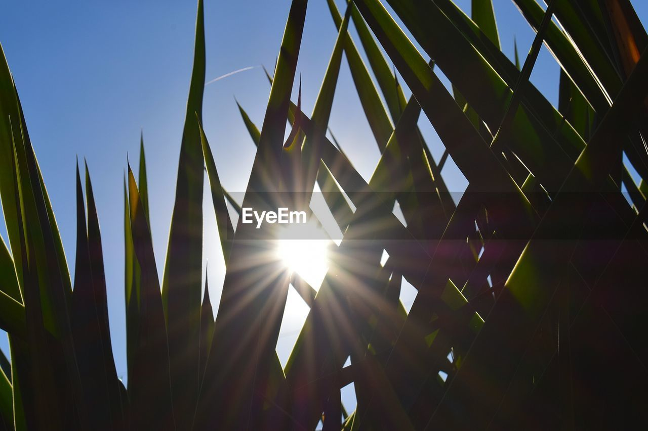 growth, sky, sunlight, beauty in nature, plant, nature, no people, lens flare, low angle view, day, sun, sunbeam, clear sky, tranquility, sunny, outdoors, green color, leaf, close-up, plant part, streaming, bright, blade of grass, bamboo - plant