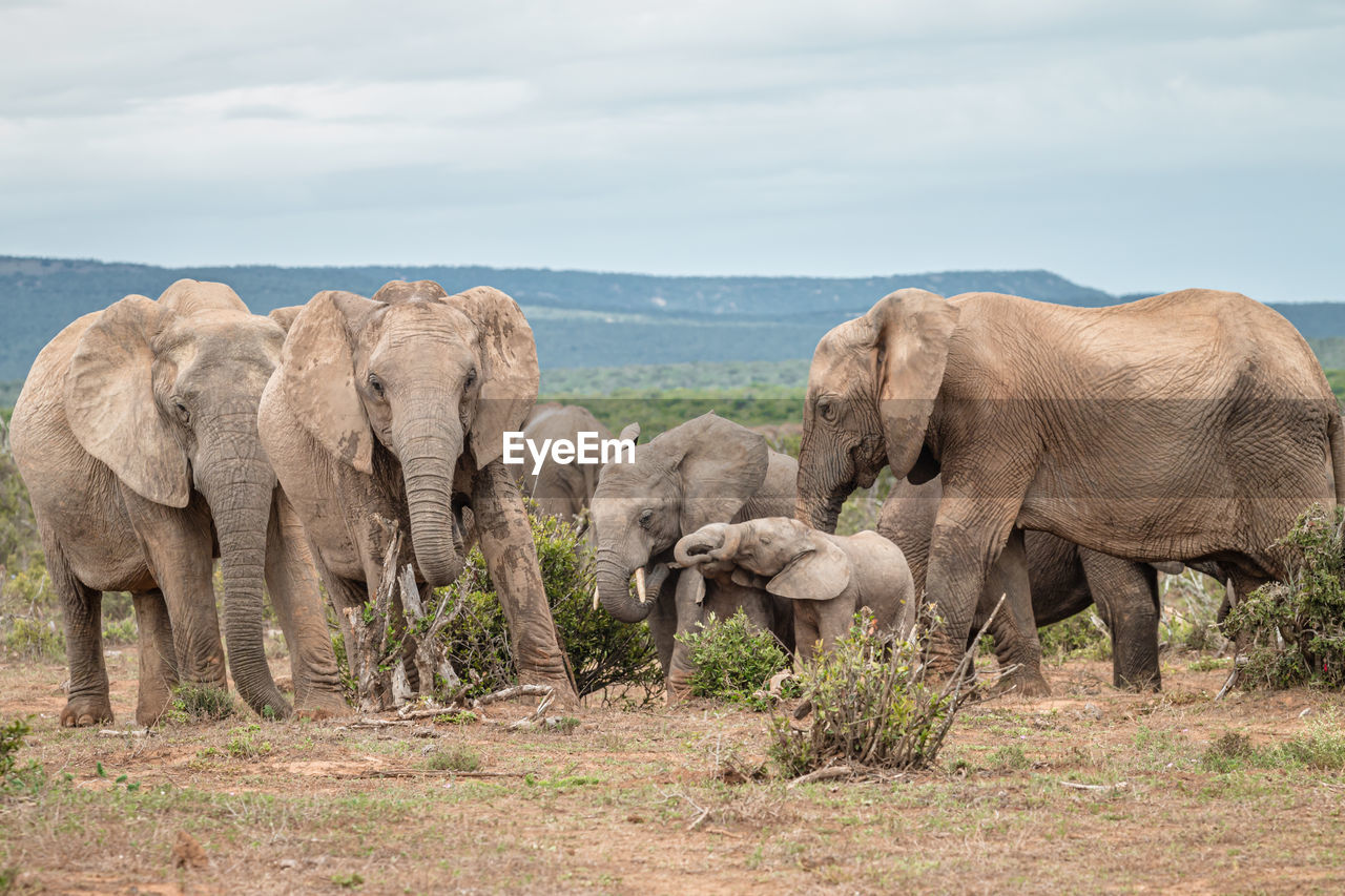 VIEW OF ELEPHANT IN A FARM